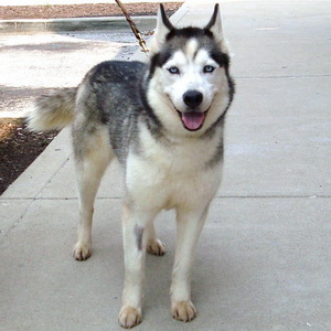 Northern Indiana Dog Rescues