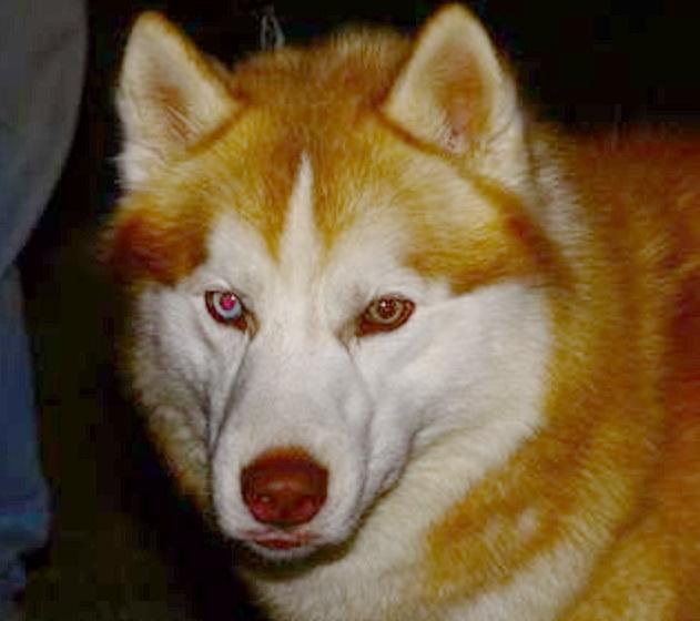 Sos Quebec Dog Rescue